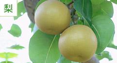 果物狩り1:梨狩り・梨産地直売