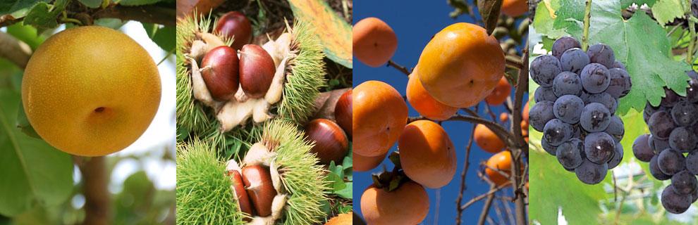果物狩り写真:梨・栗・柿・ぶどう